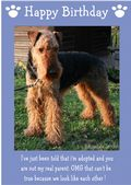 "Airedale Terrier-Happy Birthday - ""I'm Adopted"" Theme"